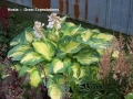 Hosta_GreatExpectations_20060702